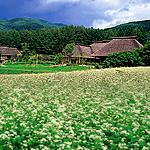 mukashibanashimura